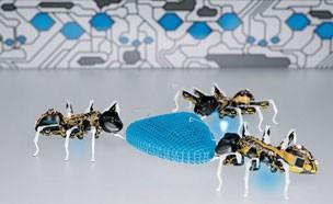 로봇개미가 사람일손을 대신한다?