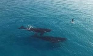 호기심많은 고래와 인간의 신비한 만남