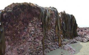 뉴질랜드 지진 얼마나 강했는지 2미터 해저가 솟아올라