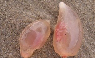 미 남부 해안을 뒤덮은 정체 불명 생명체는?