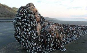 뉴질랜드 해안가 등장한 `바다 괴물`…정체는?