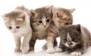 개·고양이도 전염병?…日 감염자 사망 첫 확인