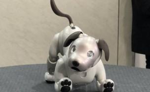 소니, 미국에서 9월부터 강아지 로봇 '아이보' 판매