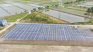 영농형 태양광 발전 국내 첫선