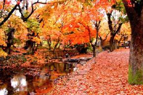 [주말에 뭐할까]가을맞이 단풍 여행
