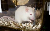 유전 변이 실험쥐로 확인한 통증 경감 치료 효과