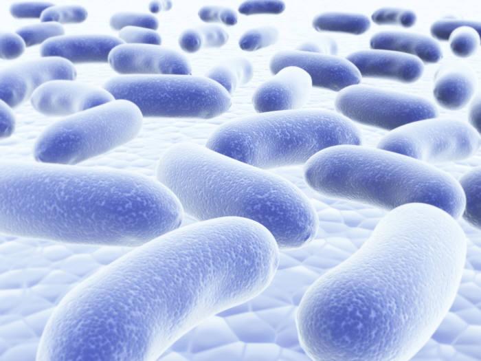[과학 핫이슈]지카바이러스 등 전염병 진단 기술