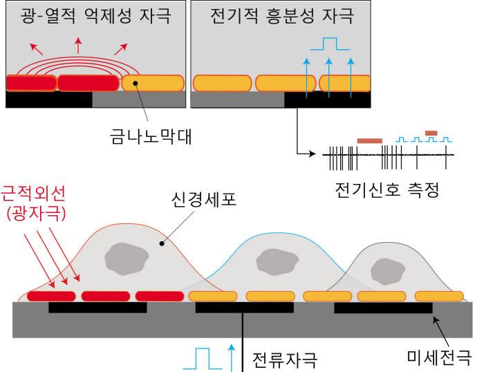 금나노막대와 미세전극칩을 결합한 광-전기 복합 자극칩 플랫폼 모식도.