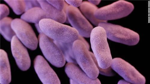 카르바페넴 내성 장내세균(CRE)의 현미경 사진