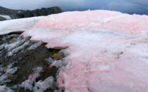 지구온난화 악순환 고리에 갇힌 적색 설원