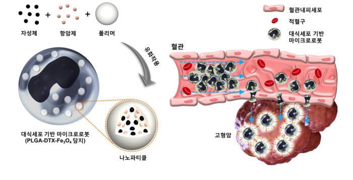 전남대 연구팀, 암 치료용 `마이크로 로봇` 최초 개발