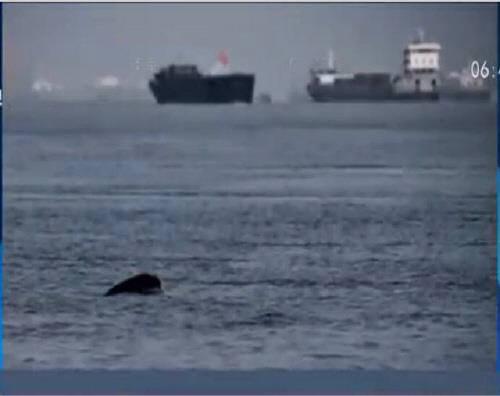 민간 탐사팀이 촬영한 양쯔강 돌고래의 흔적