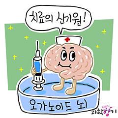 [KISTI 과학향기]오가노이드 뇌, 치매 치료 신기원 열까