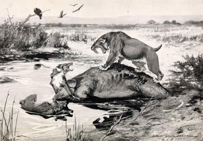 830만년전 고양이 화석 발견···무게가 404㎏