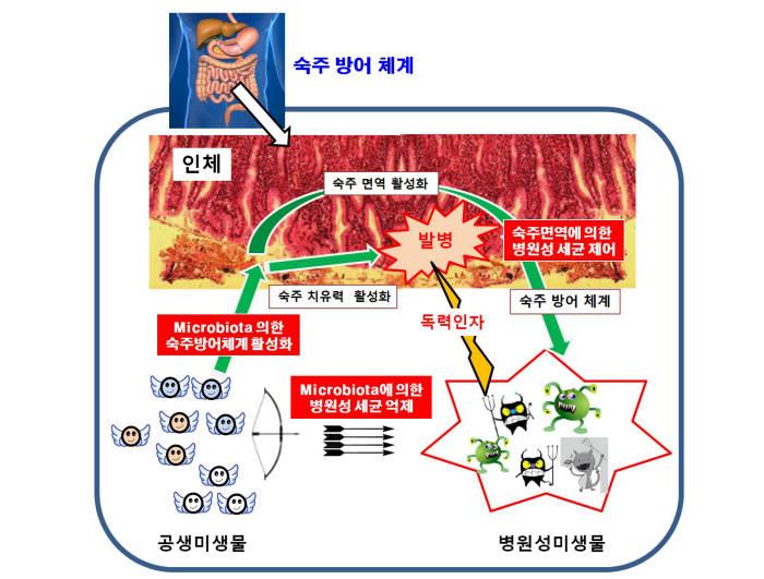 미생물을 이용한 병원성 세균 억제 모식도<자료: 김건우 서강대 교수 제공>