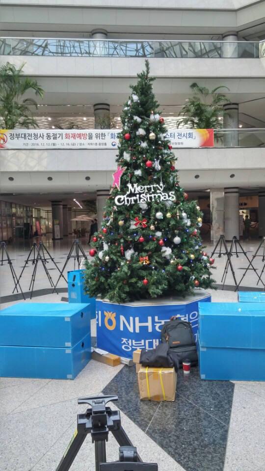 [기자의 일상]크리스마스트리