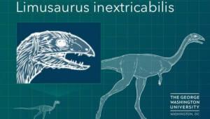 자라면서 이빨 사라지는 공룡 발견