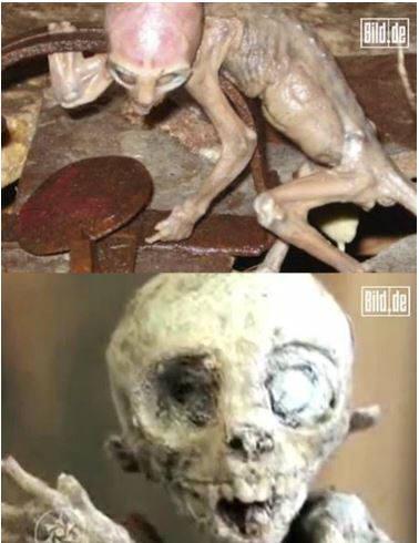 아기 외계인 사체/출처 : 독일 일간지 빌트(Bild)
