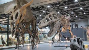 국립중앙과학관 자연사관 개관…`한반도 땅 이야기와 생명 역사` 한눈에