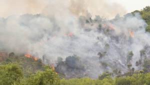 '봄철 산불 막아라'...산림청, 대형산불 특별대책기간 돌입