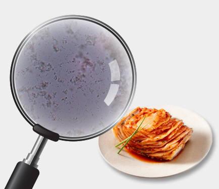 김치 유산균