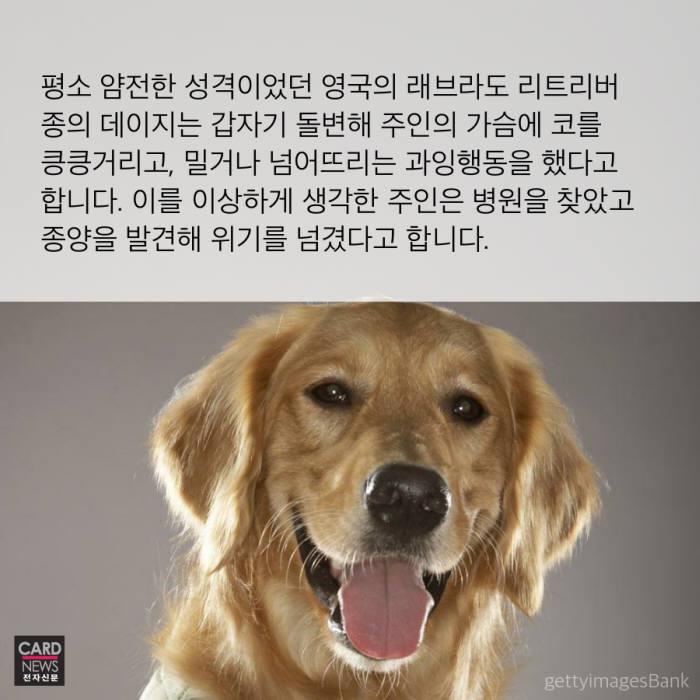[카드뉴스]'킁킁킁' 주인님에게서 암세포의 향기가