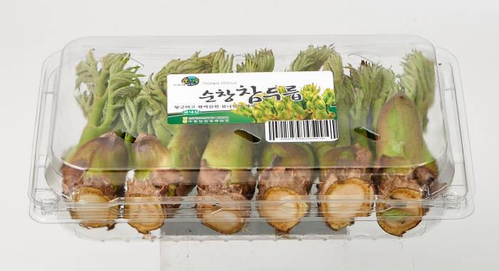 롯데마트, 산지서 당일 수확한 '햇 참두릅' 판매