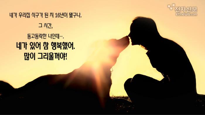 [모션그래픽]삼가 故犬의 명복을 빕니다