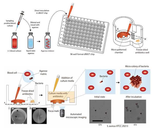 초고속 항생제 감수성 검사 준비 과정 및 바이오칩 구조도