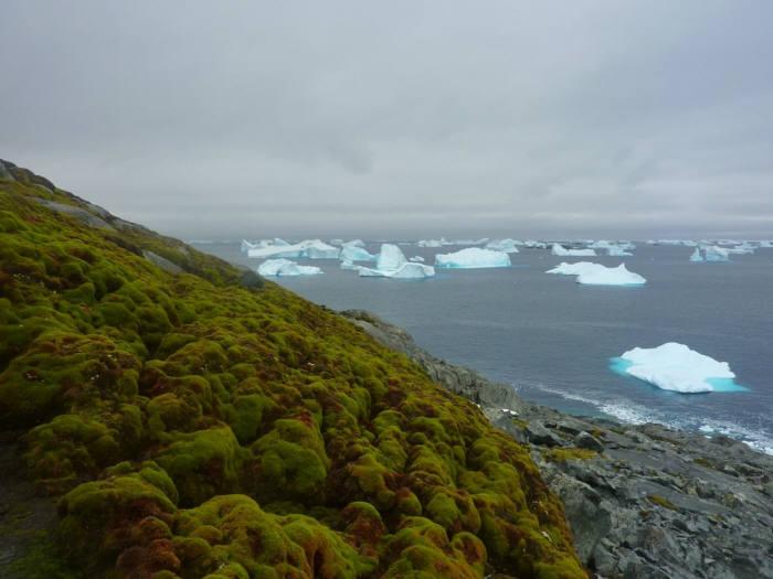 매튜 에임즈버리 연구원이 찍은 남극 이끼 사진