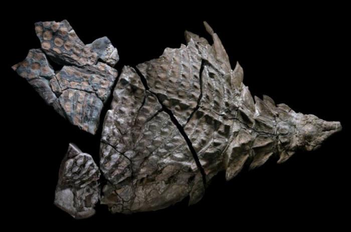 생전 그대로의 공룡 화석, 캐나다서 공개…'피부까지 완벽 보존'