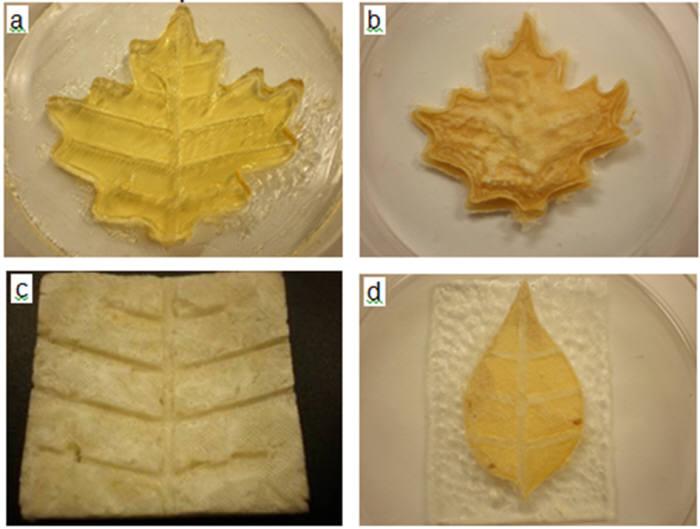 드랙슬대에서 개발한 인공광합성 소자로 만든 나뭇잎. ⓒ Drexel University