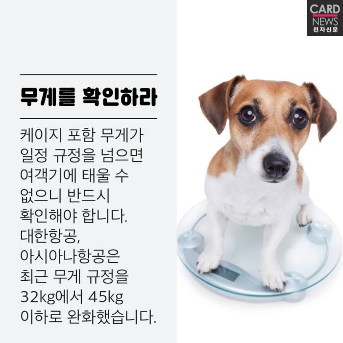 [카드뉴스]해외여행 반려동물과 함께가요