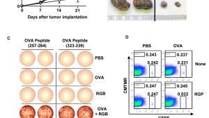 한-중 연구팀, 한약재서 암 치료 면역보조제 발견