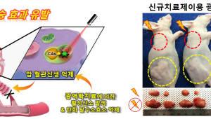 암세포 표적률 높인 광역학치료제 개발