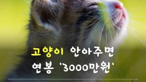 고양이 안아주면 '연봉 3000만원'