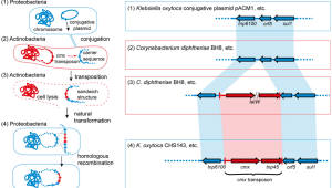 KAIST, 병원균이 항생제 내성 갖는 원리 규명