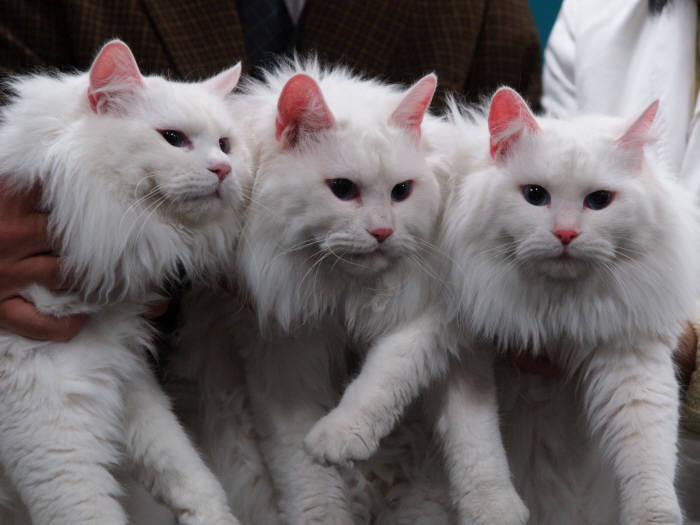고양이, 인간 품으로 들어온 시초는 언제였을까?