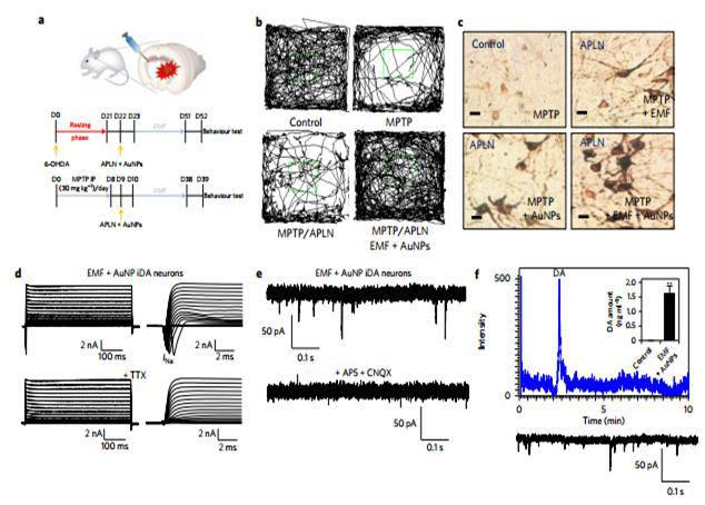 나노 일렉트로닉스 기술을 이용해 신개념 생체 내(in vivo) 도파민 신경세포 직접교차분화 리프로그래밍한 것