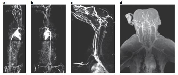 연구팀이 개발한 산화철 나노입자 조영제로 개, 원숭이의 혈관을 조영한 모습