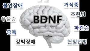 치매·우울증 단백질 생성 위치에 따라 조절 기능 달라진다...한국뇌연구원 규명