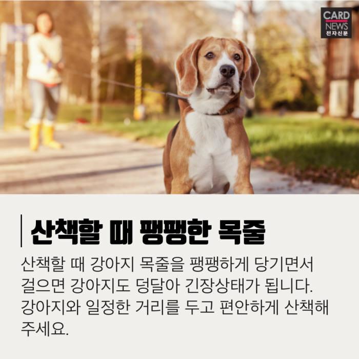 [카드뉴스]제발 이것만은 피해주'개'