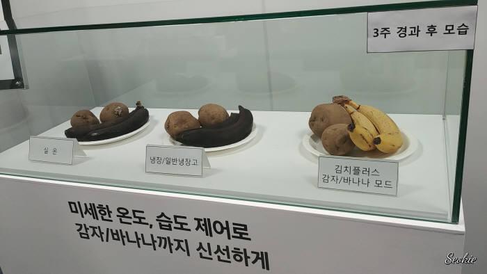 삼성전자 '김치플러스'에서는 변질되기 쉬운 감자와 바나나도 최대 3주간 신선하게 유지가 가능하다. 사진은 실온과 냉장, 김치플러스 감자/바나나 모드에서 3주 동안 보관한 감자, 바나나를 비교한 모습