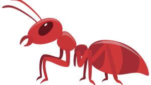 붉은불개미