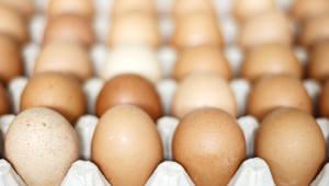 살충제 계란 회수율 20% 불과