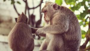 브라질 '황열병 원숭이' 발견..상파울루 100만명 백신 접종 착수