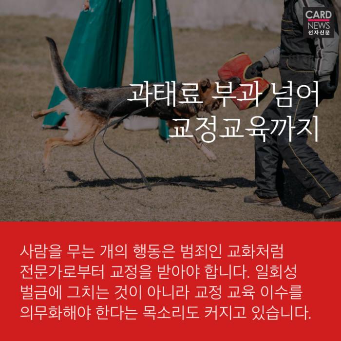 [카드뉴스]갈수록 커지는 도그포비아