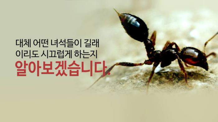 [모션그래픽]'부산항 습격' 붉은 불개미가 뭐길래