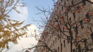 [기자의 일상]과기정통부의 깊어 가는 가을
