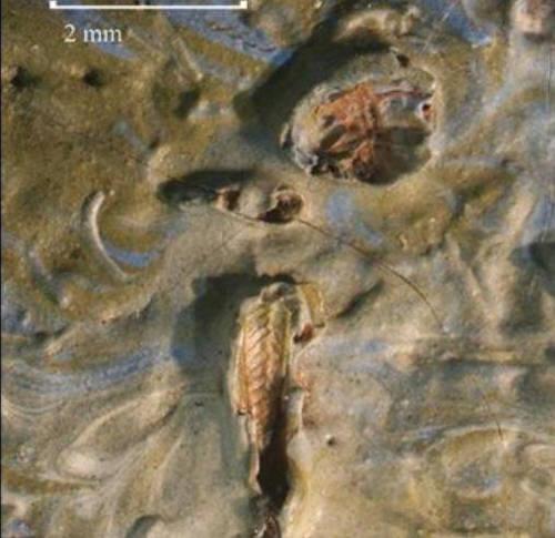 반고흐 그림에서 발견된 128년 된 메뚜기 사체 [폭스뉴스 홈페이지 캡처]